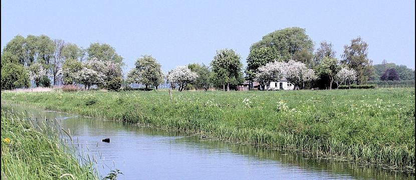 Zicht over een wetering op een boerderijtje met bloeiende fruitbomen.
